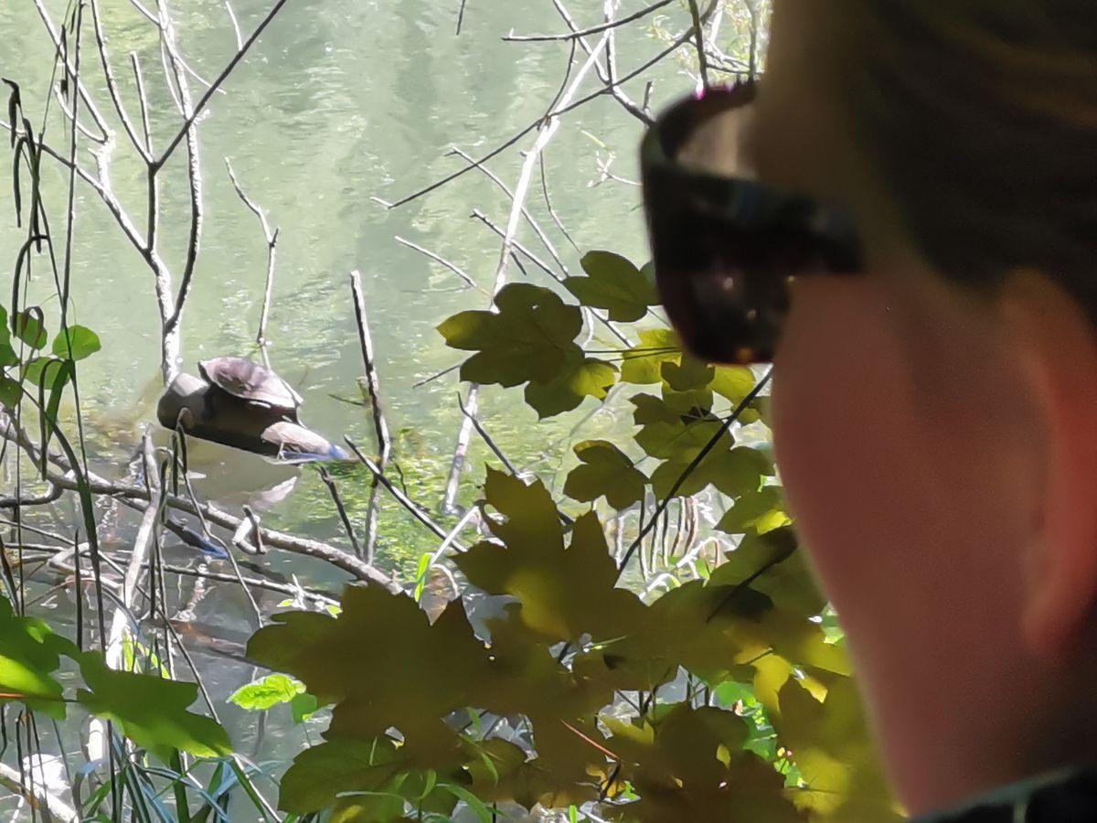 Buchempfehlung Das Cafe am Rande der Welt Schildkröte als Symbol für das Leben Turtle Frau Beobachten sonnig